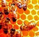 Воск пчелиный, соты, мед